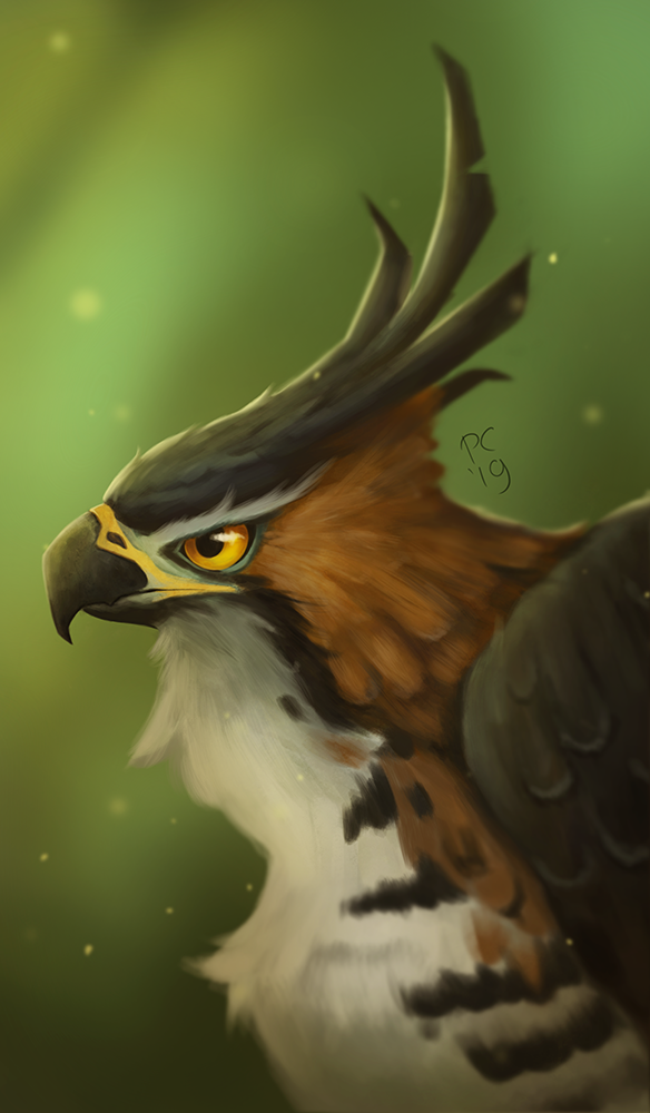 Ornate hawk